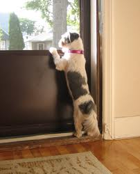 Training Your Dog To Stay Away From The Door